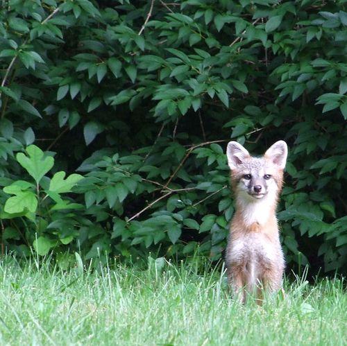Bubba Fox